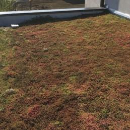 Réalisation d'une terrasse végétalisée à Lille 1