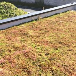 Réalisation d'une terrasse végétalisée à Lille 2