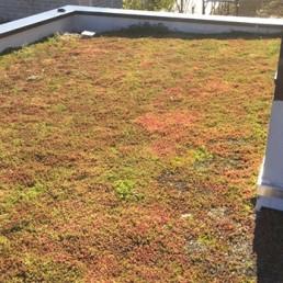 Réalisation d'une terrasse végétalisée à Lille 3